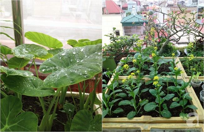 Khu vườn đủ loại rau xanh, trái ngọt không khác gì một trang trại thu nhỏ trên sân thượng của bà mẹ hai con ở Hải Phòng - Ảnh 10.