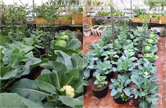 Khu vườn đủ loại rau xanh, trái ngọt không khác gì một trang trại thu nhỏ trên sân thượng của bà mẹ hai con ở Hải Phòng - Ảnh 11.