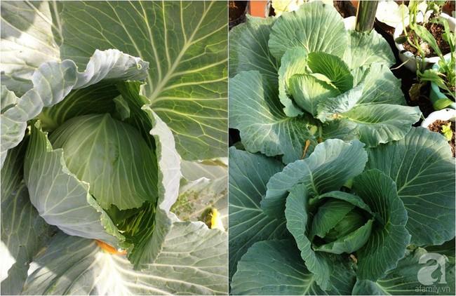 Khu vườn đủ loại rau xanh, trái ngọt không khác gì một trang trại thu nhỏ trên sân thượng của bà mẹ hai con ở Hải Phòng - Ảnh 12.