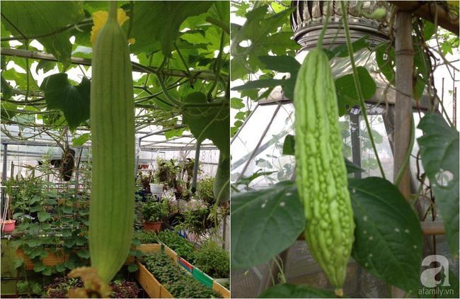 Khu vườn đủ loại rau xanh, trái ngọt không khác gì một trang trại thu nhỏ trên sân thượng của bà mẹ hai con ở Hải Phòng - Ảnh 19.