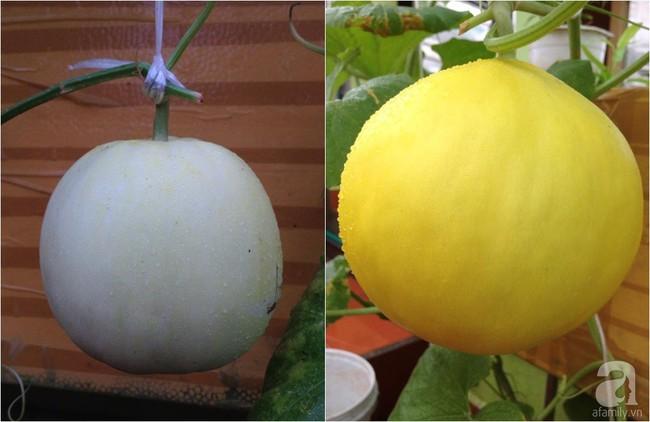 Khu vườn đủ loại rau xanh, trái ngọt không khác gì một trang trại thu nhỏ trên sân thượng của bà mẹ hai con ở Hải Phòng - Ảnh 21.
