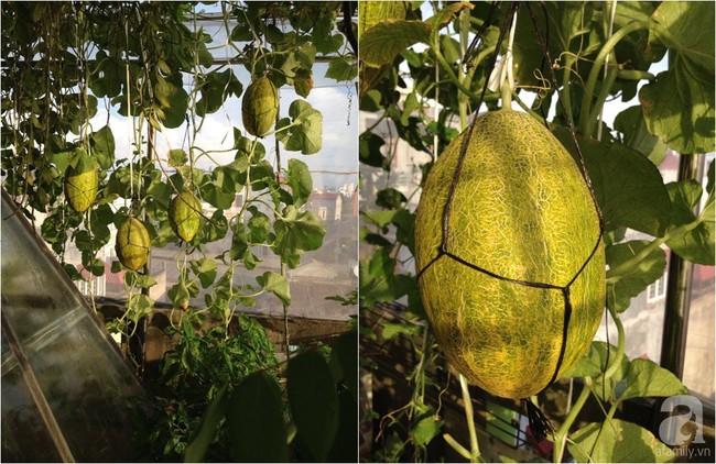 Khu vườn đủ loại rau xanh, trái ngọt không khác gì một trang trại thu nhỏ trên sân thượng của bà mẹ hai con ở Hải Phòng - Ảnh 22.