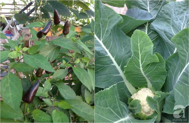 Khu vườn đủ loại rau xanh, trái ngọt không khác gì một trang trại thu nhỏ trên sân thượng của bà mẹ hai con ở Hải Phòng - Ảnh 23.