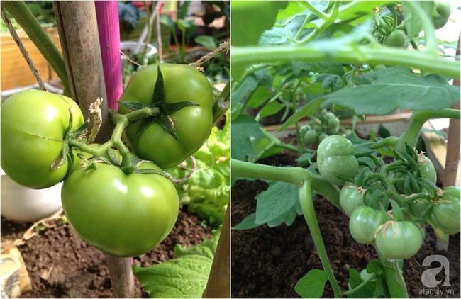 Khu vườn đủ loại rau xanh, trái ngọt không khác gì một trang trại thu nhỏ trên sân thượng của bà mẹ hai con ở Hải Phòng - Ảnh 24.