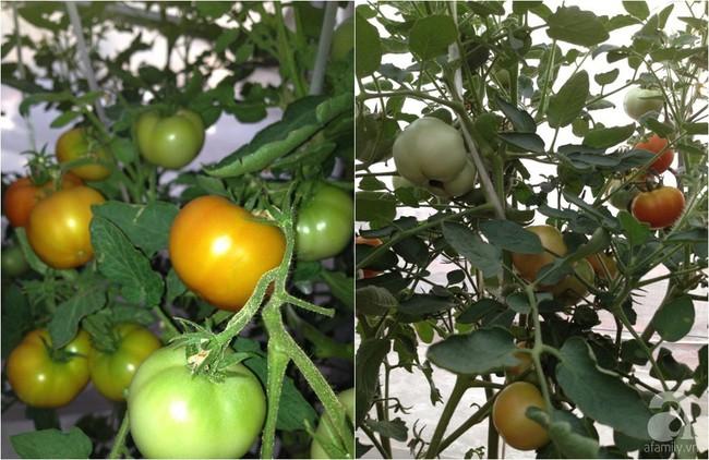 Khu vườn đủ loại rau xanh, trái ngọt không khác gì một trang trại thu nhỏ trên sân thượng của bà mẹ hai con ở Hải Phòng - Ảnh 26.