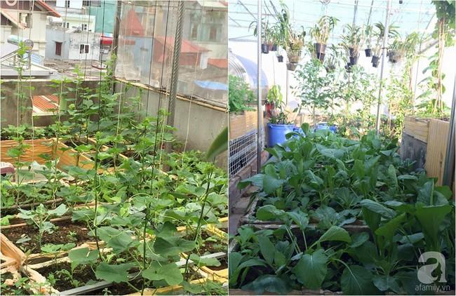 Khu vườn đủ loại rau xanh, trái ngọt không khác gì một trang trại thu nhỏ trên sân thượng của bà mẹ hai con ở Hải Phòng - Ảnh 4.
