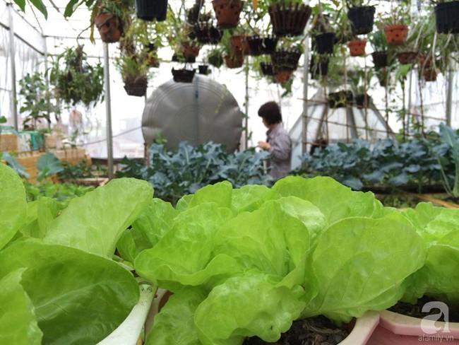 Khu vườn đủ loại rau xanh, trái ngọt không khác gì một trang trại thu nhỏ trên sân thượng của bà mẹ hai con ở Hải Phòng - Ảnh 5.