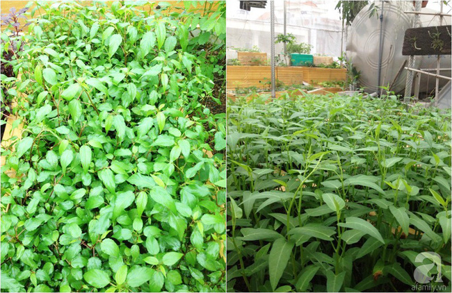 Khu vườn đủ loại rau xanh, trái ngọt không khác gì một trang trại thu nhỏ trên sân thượng của bà mẹ hai con ở Hải Phòng - Ảnh 7.