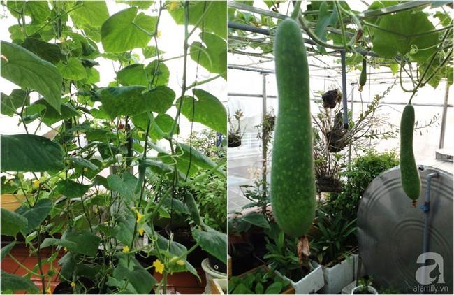 Khu vườn đủ loại rau xanh, trái ngọt không khác gì một trang trại thu nhỏ trên sân thượng của bà mẹ hai con ở Hải Phòng - Ảnh 9.