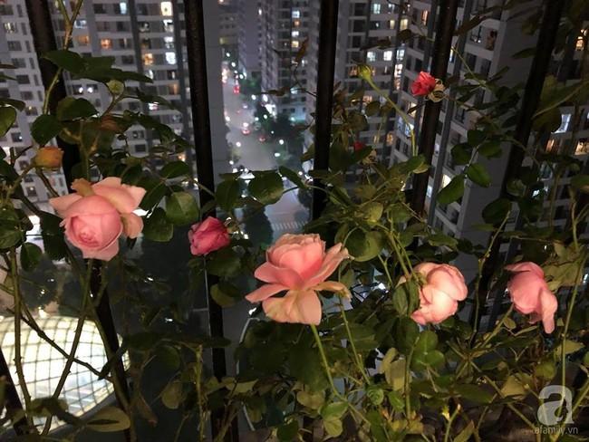 Ban công chỉ vỏn vẻn 5m² nhưng bốn mùa nở hoa và tổ ấm tràn ngập hương thơm của mẹ Hà Thành - Ảnh 19.