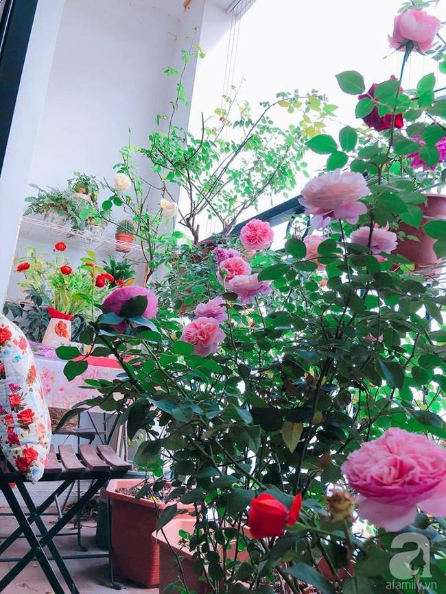 Ban công chỉ vỏn vẻn 5m² nhưng bốn mùa nở hoa và tổ ấm tràn ngập hương thơm của mẹ Hà Thành - Ảnh 2.