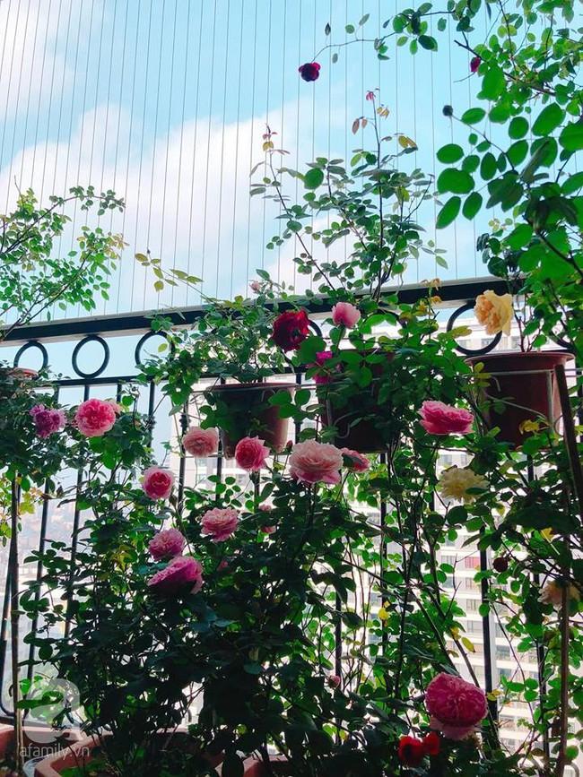 Ban công chỉ vỏn vẻn 5m² nhưng bốn mùa nở hoa và tổ ấm tràn ngập hương thơm của mẹ Hà Thành - Ảnh 1.