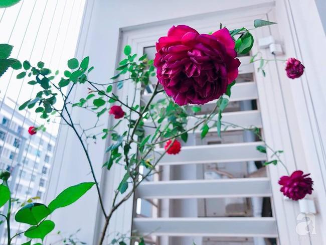 Ban công chỉ vỏn vẻn 5m² nhưng bốn mùa nở hoa và tổ ấm tràn ngập hương thơm của mẹ Hà Thành - Ảnh 15.