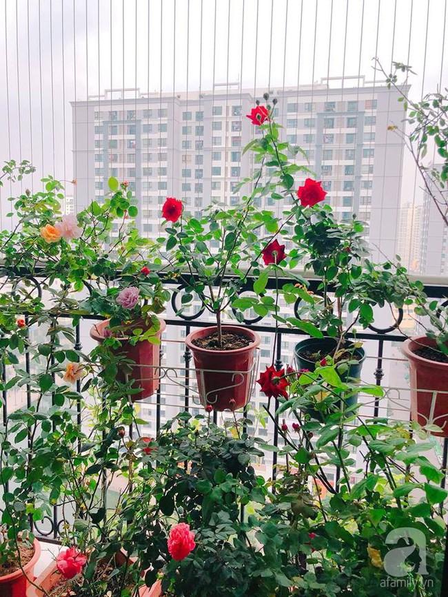 Ban công chỉ vỏn vẻn 5m² nhưng bốn mùa nở hoa và tổ ấm tràn ngập hương thơm của mẹ Hà Thành - Ảnh 10.