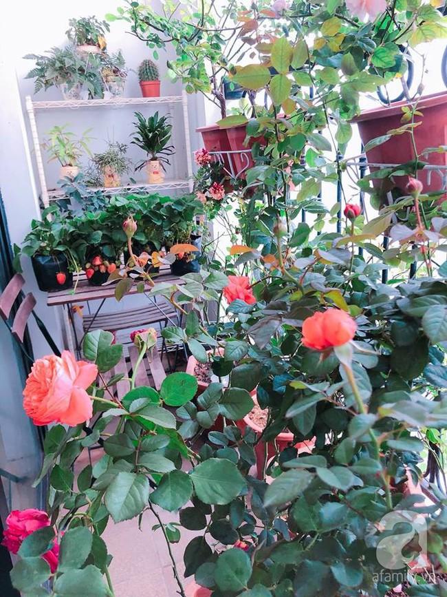 Ban công chỉ vỏn vẻn 5m² nhưng bốn mùa nở hoa và tổ ấm tràn ngập hương thơm của mẹ Hà Thành - Ảnh 7.