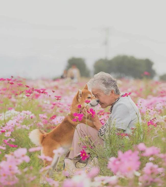 Bộ ảnh đầy cảm xúc của cụ bà Nhật Bản và chú cún con: Khi về già, chỉ cần một người đồng hành đáng yêu thế này thôi! - Ảnh 1.