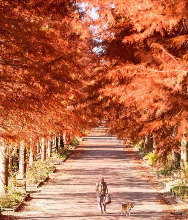 Bộ ảnh đầy cảm xúc của cụ bà Nhật Bản và chú cún con: Khi về già, chỉ cần một người đồng hành đáng yêu thế này thôi! - Ảnh 8.
