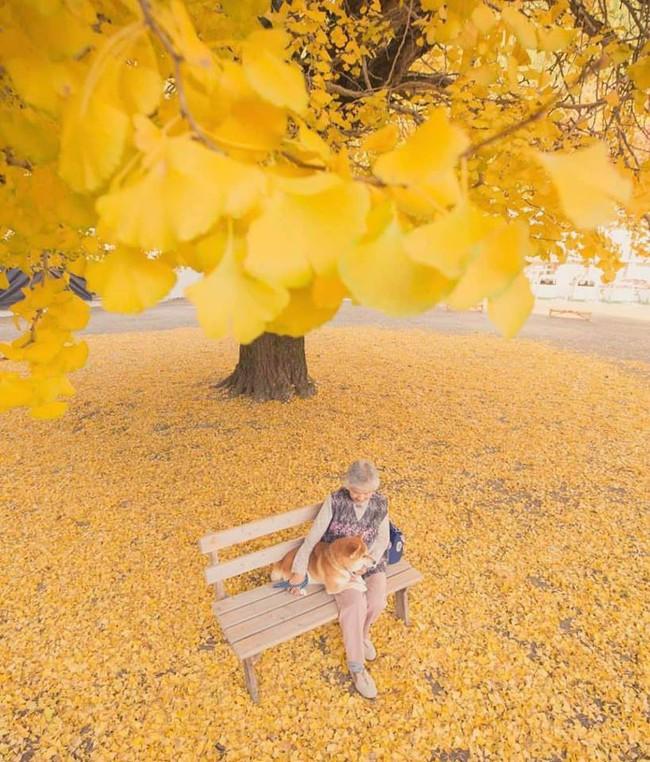 Bộ ảnh đầy cảm xúc của cụ bà Nhật Bản và chú cún con: Khi về già, chỉ cần một người đồng hành đáng yêu thế này thôi! - Ảnh 12.