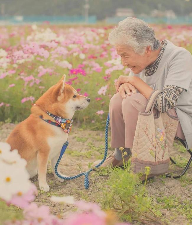 Bộ ảnh đầy cảm xúc của cụ bà Nhật Bản và chú cún con: Khi về già, chỉ cần một người đồng hành đáng yêu thế này thôi! - Ảnh 16.