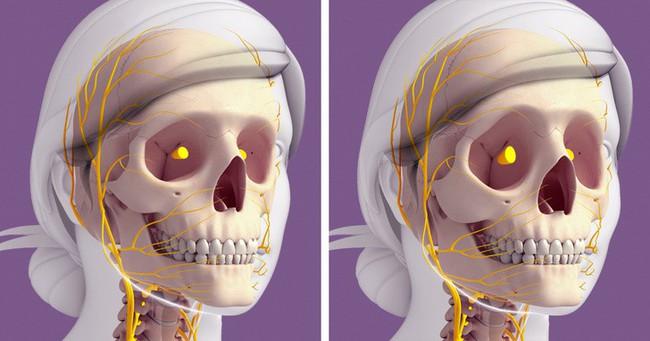 Cơ thể bị lão hóa như thế nào sau tuổi 30? Và những cách đẩy lùi lão hóa chúng ta nên làm - Ảnh 1.