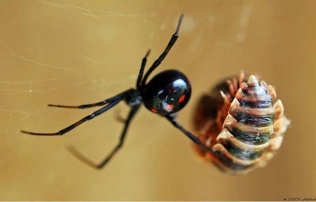 Chỉ với một vết nhện cắn, bé 9 tuổi bị thủng chân, suýt chút nữa mất cả chân - Ảnh 5.