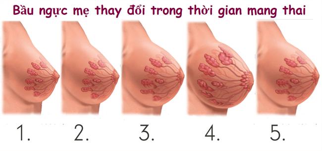 Những rắc rối tế nhị ở nhũ hoa khi mang thai mẹ bầu hay gặp   và điều nên làm để ứng phó với tình trạng này - Ảnh 2.