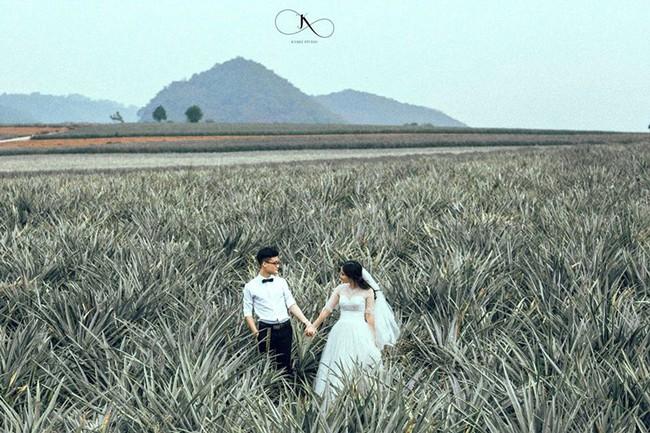 Đồi dứa xanh không xa Hà Nội thích hợp cho nhiều gia đình đi du lịch dịp lễ tới: Nhiều góc sống ảo, dứa ngọt lịm tim - Ảnh 11.