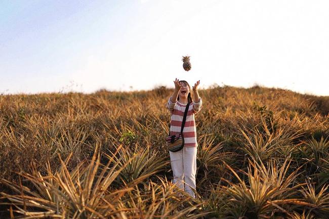 Đồi dứa xanh không xa Hà Nội thích hợp cho nhiều gia đình đi du lịch dịp lễ tới: Nhiều góc sống ảo, dứa ngọt lịm tim - Ảnh 10.