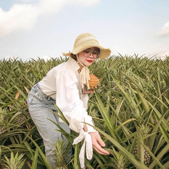 Đồi dứa xanh không xa Hà Nội thích hợp cho nhiều gia đình đi du lịch dịp lễ tới: Nhiều góc sống ảo, dứa ngọt lịm tim - Ảnh 5.