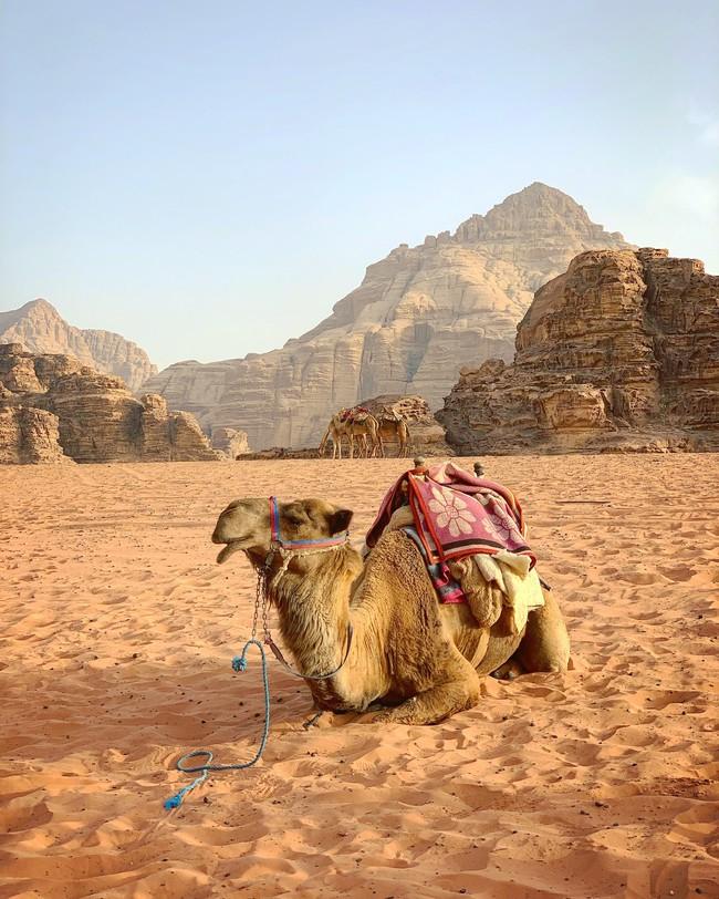 Mẹ 1 con xinh đẹp chi hàng trăm triệu đến Jordan đọc sách giữa Biển Chết, cưỡi lạc đà sa mạc - Ảnh 1.