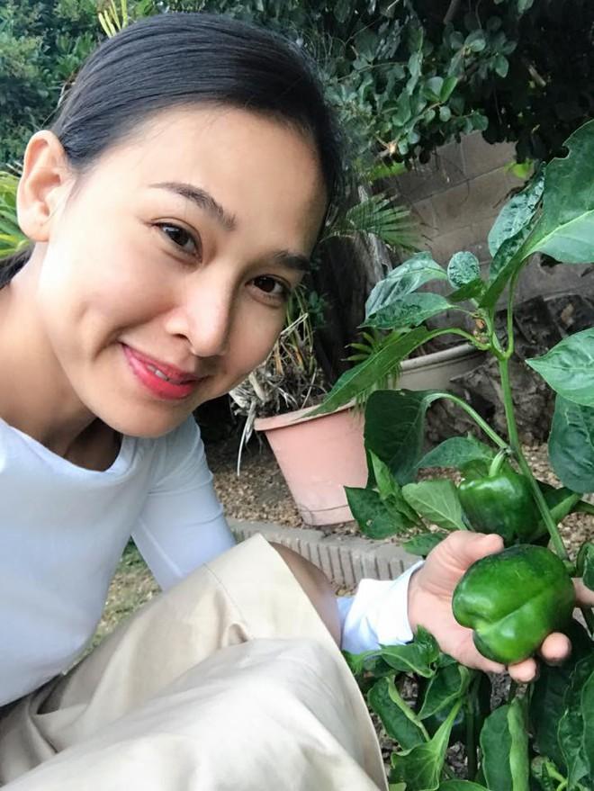 Cận cảnh khu vườn có nhiều loại rau củ Việt của hoa hậu Dương Mỹ Linh trên đất Mỹ - Ảnh 3.