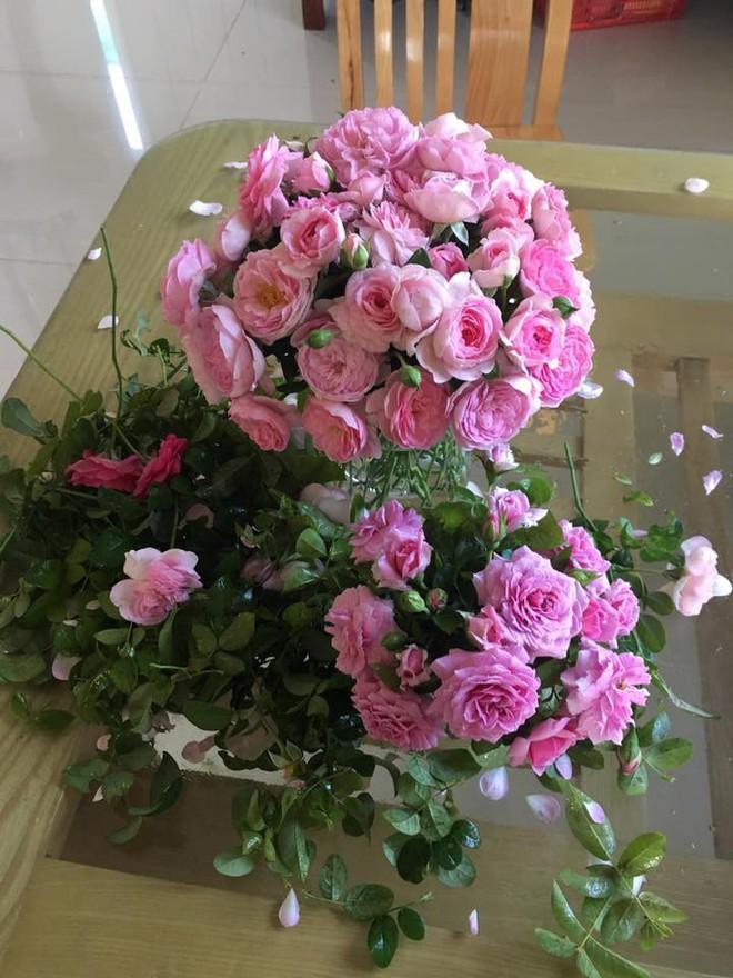 Khu vườn hoa hồng 2000 gốc gây thương nhớ cho bất cứ ai của chàng trai 9x ở Đồng Nai - Ảnh 33.