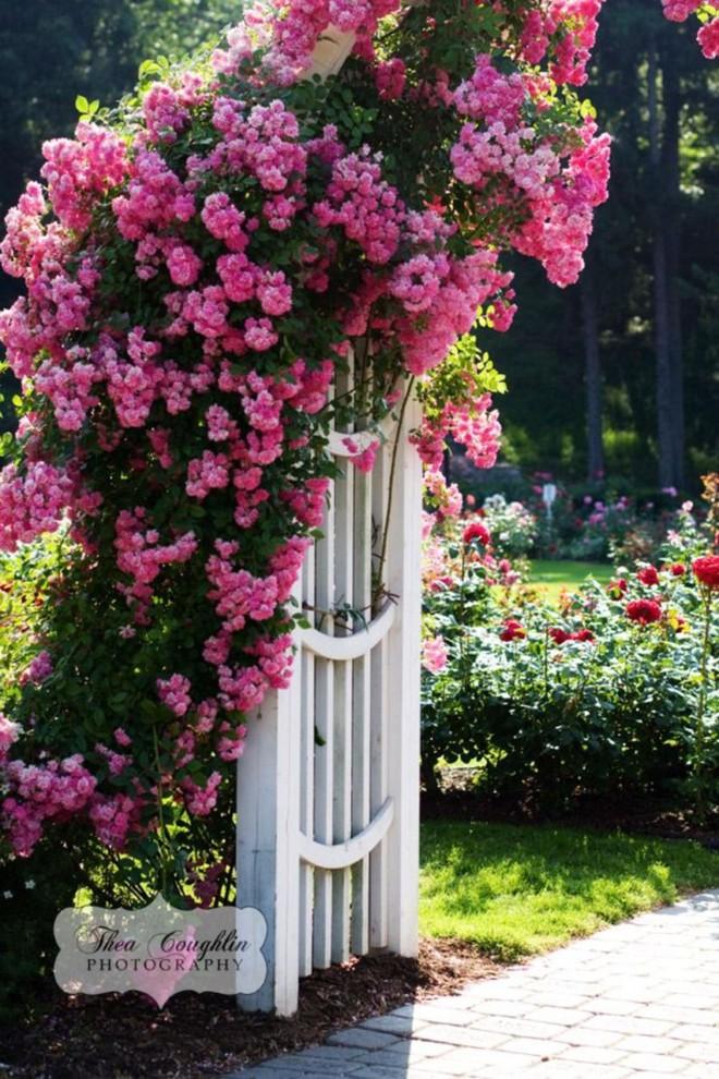 Chiêm ngưỡng vẻ đẹp lộng lẫy của những chiếc cổng nhà tràn ngập hoa - Ảnh 13.