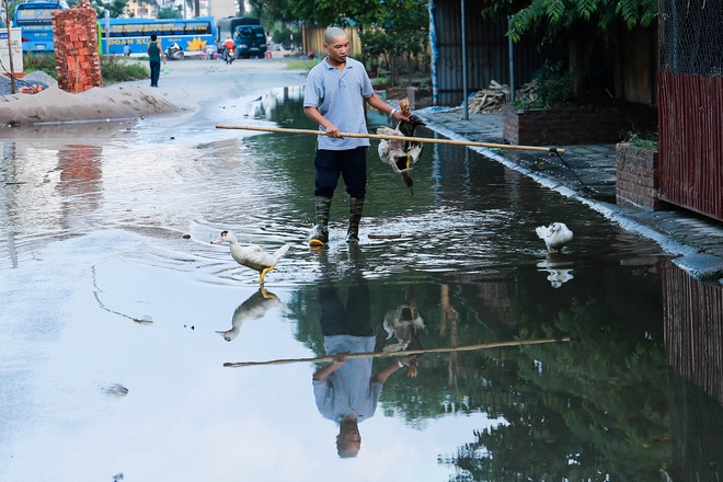 Hà Nội: Ngập úng quanh năm, người dân thả vịt ngay trên đường khu đô thị - Ảnh 3.