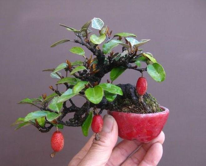 10 chậu bonsai cây ăn trái mini siêu đẹp dùng trang trí nhà dịp Tết - Ảnh 1.