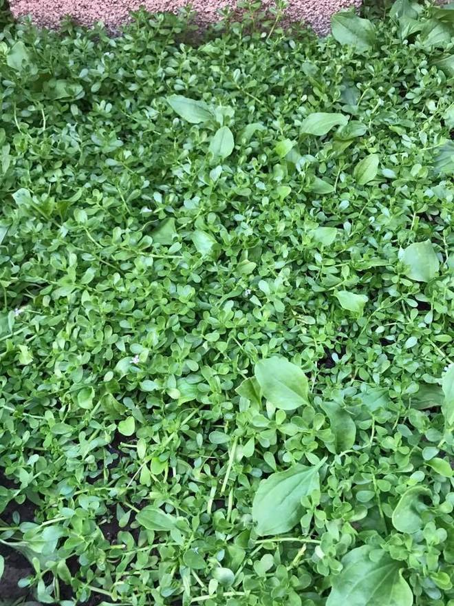 Cận cảnh khu vườn có nhiều loại rau củ Việt của hoa hậu Dương Mỹ Linh trên đất Mỹ - Ảnh 5.