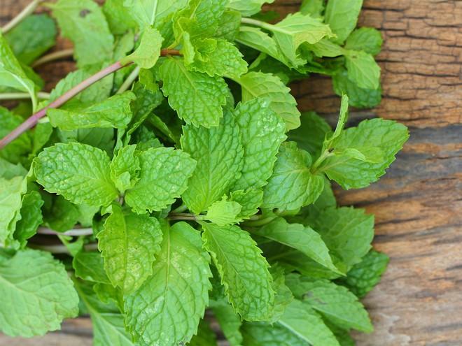 Nếu bị viêm mũi, viêm xoang: Đây là bài thuốc siêu dễ giúp bạn trị bệnh tại nhà nhờ loại lá quen thuộc - Ảnh 2.