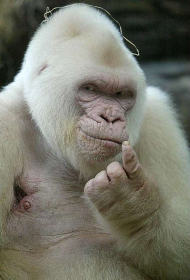 Khi động vật bị bạch tạng, trông chúng sẽ như thế này - Ảnh 11.