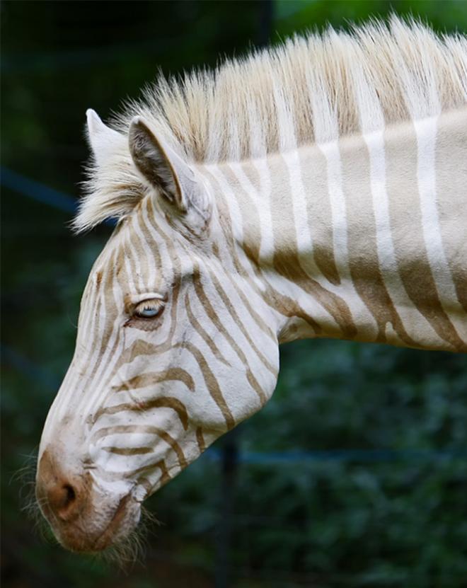 Khi động vật bị bạch tạng, trông chúng sẽ như thế này - Ảnh 12.