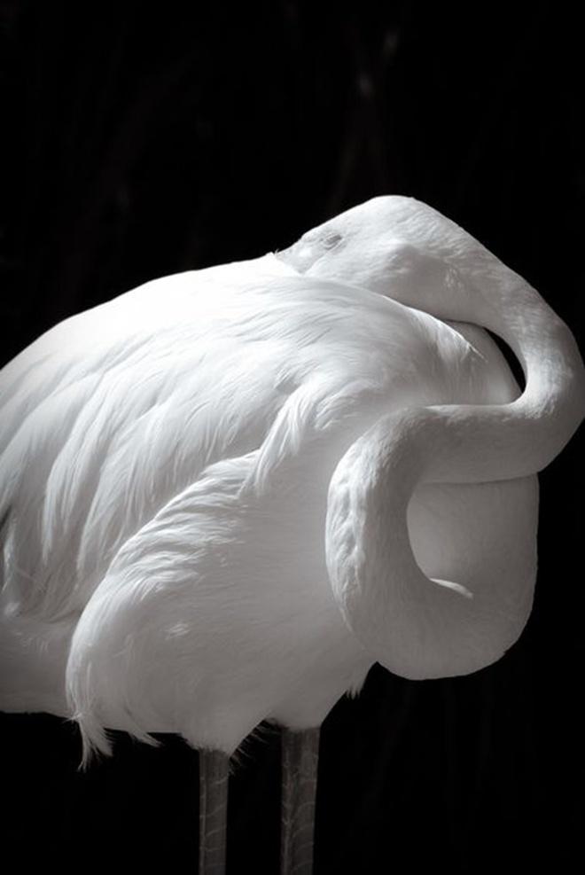Khi động vật bị bạch tạng, trông chúng sẽ như thế này - Ảnh 14.