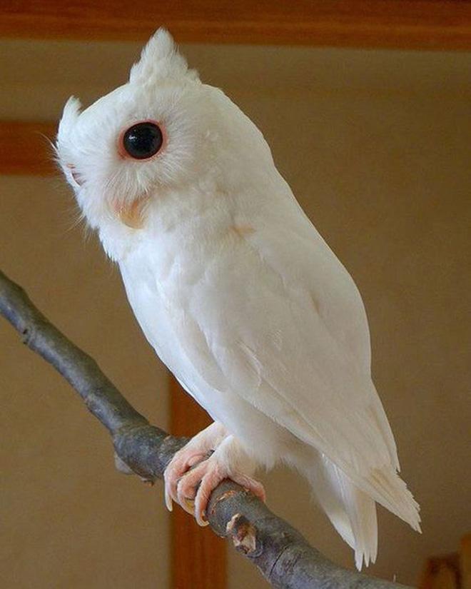 Khi động vật bị bạch tạng, trông chúng sẽ như thế này - Ảnh 18.
