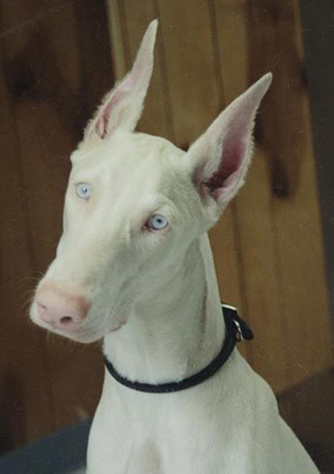 Khi động vật bị bạch tạng, trông chúng sẽ như thế này - Ảnh 2.