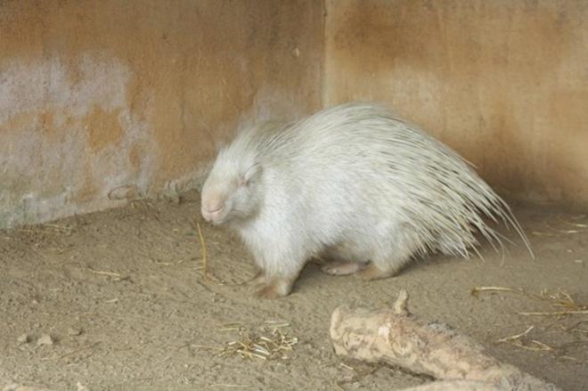 Khi động vật bị bạch tạng, trông chúng sẽ như thế này - Ảnh 25.