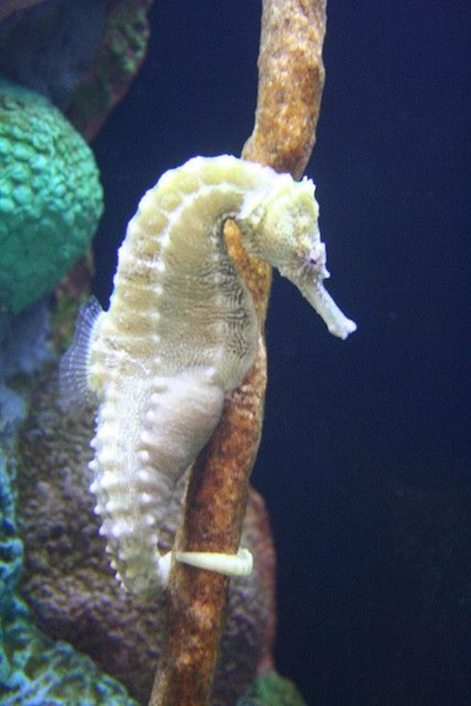 Khi động vật bị bạch tạng, trông chúng sẽ như thế này - Ảnh 3.