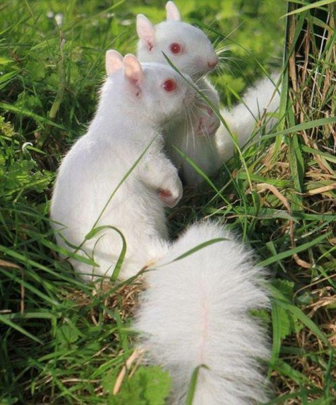 Khi động vật bị bạch tạng, trông chúng sẽ như thế này - Ảnh 7.