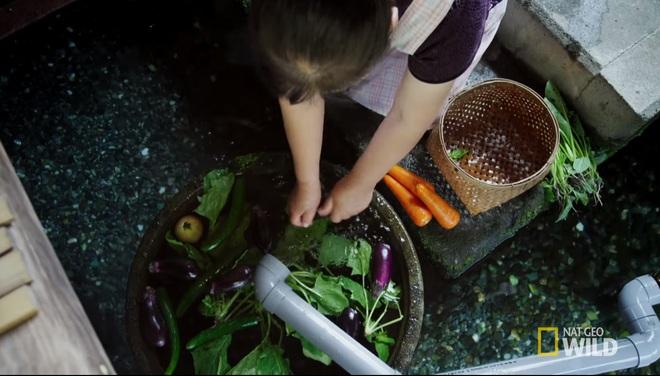 Ở Nhật, người ta có thể rửa bát, rửa rau ngay ở hồ cá trong nhà, bí quyết là nhờ… - Ảnh 1.