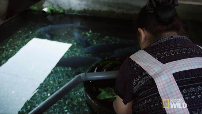 Ở Nhật, người ta có thể rửa bát, rửa rau ngay ở hồ cá trong nhà, bí quyết là nhờ… - Ảnh 2.