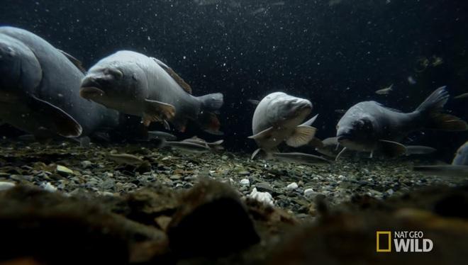 Ở Nhật, người ta có thể rửa bát, rửa rau ngay ở hồ cá trong nhà, bí quyết là nhờ… - Ảnh 5.