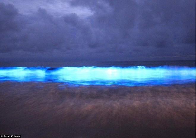 Kỳ diệu vùng nước biển cứ chạm vào là phát ra ánh sáng màu xanh lam   - Ảnh 8.