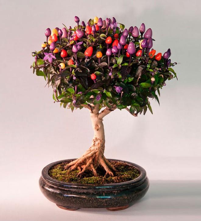 10 chậu bonsai cây ăn trái mini siêu đẹp dùng trang trí nhà dịp Tết - Ảnh 3.